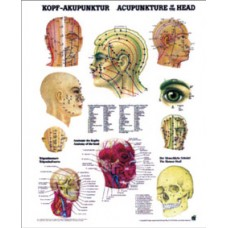 TB9507 Head Acupuncture Poster
