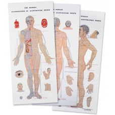 6815 POSTER ACUPUNCTURE POINTS