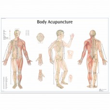 BODY ACUPUNCTURE POSTER VR1820