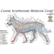 Dog Acupuncture Meridian Chart