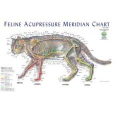 Cat Acupuncture Meridian Chart