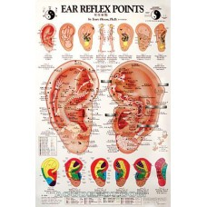 EAR REFLEX POINTS POSTER DR. OLESON