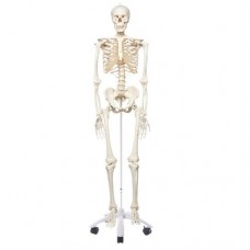 A10 CLASSIC SKELETON STAN ON 4 FEET ROLLER STAND
